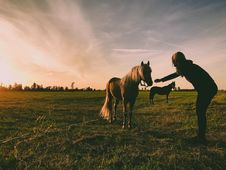 Free Photo Of Person Near Horse Royalty Free Stock Images - 120524169