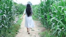 Free Woman Walking In A Corn Field Stock Photography - 120524172