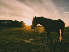 Free Silhouette Photography Of Horse Stock Images - 120524194