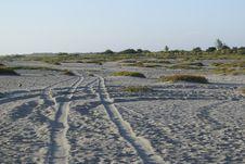 Free Shore, Coast, Mudflat, Wetland Royalty Free Stock Images - 120554109