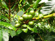 Free Vegetation, Fruit Tree, Plant, Fruit Stock Photography - 120554242