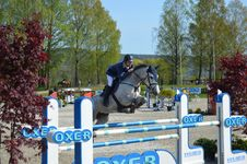 Free English Riding, Show Jumping, Horse, Equestrianism Stock Photography - 120554662