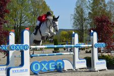 Free English Riding, Horse, Show Jumping, Equestrianism Stock Photography - 120554762