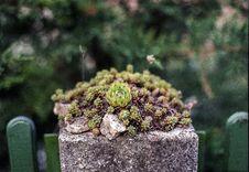 Free Plant, Vegetation, Flora, Houseplant Royalty Free Stock Photos - 120554768