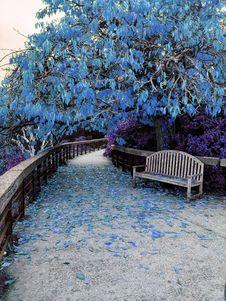 Free Tree, Plant, Leaf, Flower Royalty Free Stock Photo - 120554775