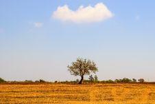 Free Sky, Grassland, Savanna, Ecosystem Stock Photo - 120554780