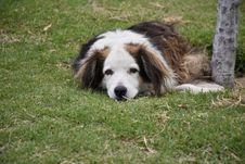 Free Dog Breed, Dog, Dog Breed Group, Grass Stock Photo - 120554790