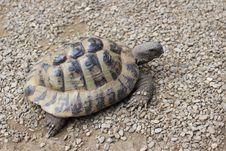 Free Tortoise, Turtle, Emydidae, Terrestrial Animal Stock Photography - 120554792