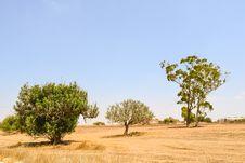 Free Ecosystem, Sky, Grassland, Savanna Royalty Free Stock Images - 120554819