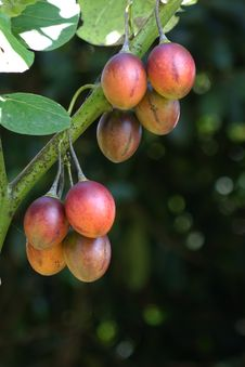 Free Fruit, Fruit Tree, Peach, Branch Royalty Free Stock Photography - 120554827