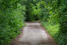 Free Path, Vegetation, Green, Nature Reserve Royalty Free Stock Image - 120554836