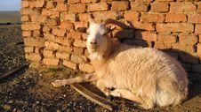 Free Goat Stock Image - 12069841