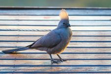 Free Gray Bird On Brown Wooden Surface Stock Photo - 120632430