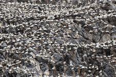 Free Rock, Rubble, Bedrock, Geology Stock Photography - 120653342