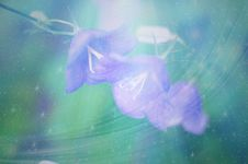 Free Blue, Sky, Purple, Atmosphere Royalty Free Stock Photography - 120653377