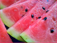 Free Watermelon, Melon, Fruit, Cucumber Gourd And Melon Family Stock Images - 120654244
