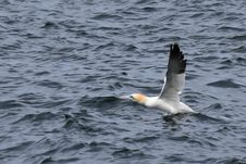Free Bird, Water, Seabird, Gull Stock Photo - 120654270