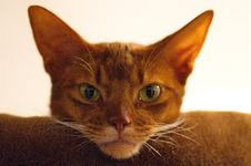 Free Cat, Whiskers, Mammal, Small To Medium Sized Cats Stock Photo - 120654430