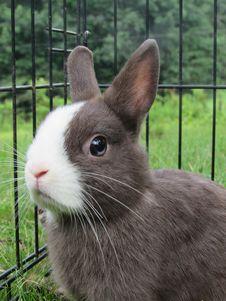 Free Rabbit, Fauna, Rabits And Hares, Domestic Rabbit Royalty Free Stock Photo - 120654485