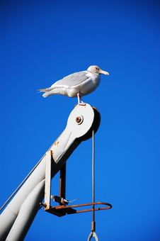 Free Seagull Against Blue Sky Stock Photo - 12079730