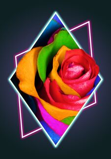 Free Decorative Rainbow Rose In Polygon Stock Images - 120760774