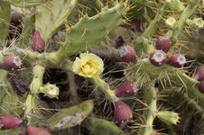 Free Plant, Flowering Plant, Vegetation, Cactus Royalty Free Stock Image - 120958086
