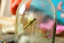 Free Glass, Bottle, Glass Bottle, Drinkware Royalty Free Stock Photo - 120958095