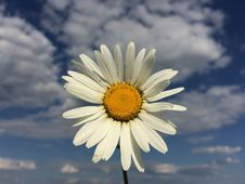Free Flower, Oxeye Daisy, Sky, Daisy Stock Images - 120958254