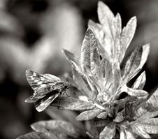 Free Black And White, Monochrome Photography, Insect, Flora Stock Photo - 120958300