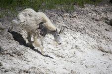 Free Goats, Mountain Goat, Wildlife, Goat Stock Photo - 120958380