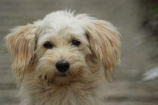 Free Dog, Dog Like Mammal, Dog Breed, Dog Breed Group Stock Image - 120958521