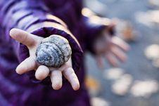 Free Hand, Seashell, Close Up, Finger Stock Photography - 120958812