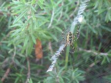 Free Invertebrate, Spider Web, Wildlife, Arthropod Stock Image - 120958901