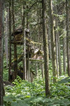 Free Woodland, Nature, Ecosystem, Tree Stock Image - 120959101