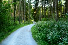 Free Path, Ecosystem, Vegetation, Nature Reserve Royalty Free Stock Image - 120959156