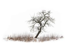 Free Branch, Tree, Black And White, Winter Stock Photography - 120959172