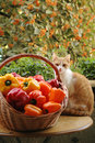 Free Cat And Peppers Royalty Free Stock Photography - 1210647