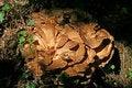 Free Fungi Royalty Free Stock Photography - 1216207