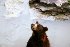 Free Bear In Lake Stock Photo - 1210520