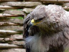 Free Eagle Stock Image - 1211841