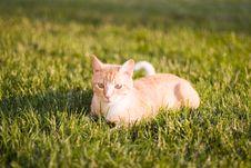Free Cat Royalty Free Stock Photos - 1211848