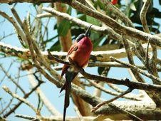 Free Bird A Sleep Royalty Free Stock Images - 1213399