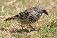 Free Baby Bird Royalty Free Stock Image - 1215166