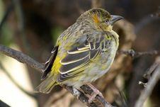 Free Baby Bird 2 Stock Photography - 1215192