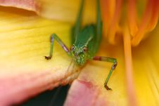 Free Green Bug Royalty Free Stock Images - 1215319
