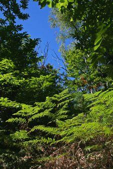 Free Foliage Royalty Free Stock Photo - 1215755