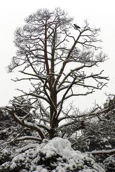 Free Winter Tree Royalty Free Stock Photos - 1218418
