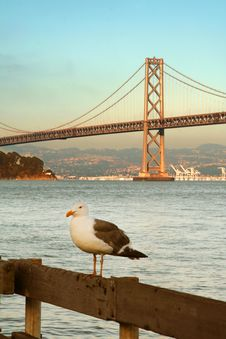 Free Seagull And Bridge Royalty Free Stock Image - 1219186