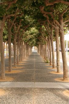 Free Tree Alley Stock Images - 1219274