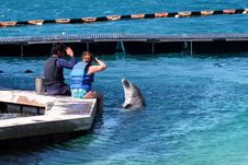 Man And Woman Giving Order To Dolphin Royalty Free Stock Photography
